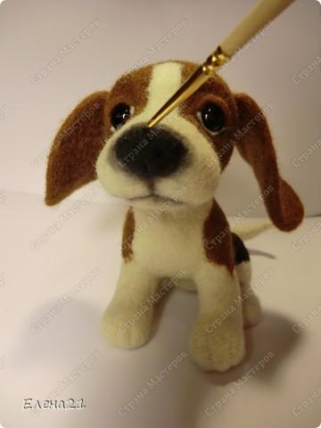 Мастер-класс Валяние (фильцевание): мастер-класс по щеночку бигли. Часть 2. Шерсть Дебют. Фото 46