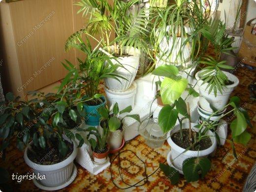 Интерьер, Поделка, изделие Лепка: Небольшой МК как я делала уютный уголок для комнатных растений Гуашь, Материал природный, Пенопласт Дебют. Фото 2