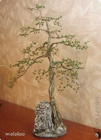 Бонсай, топиарий, Мастер-класс Бисероплетение, Моделирование: СОСНА и МК по стволам деревьев  Бисер. Фото 1
