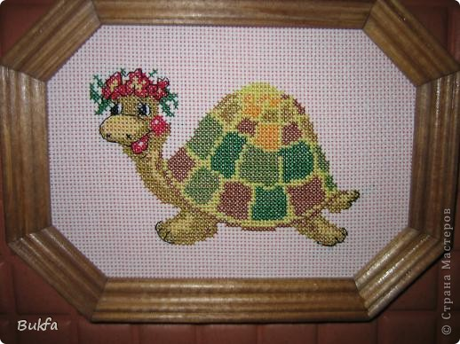 Дорогие мастерицы и мастера! Я, наконец-то пришла к концу серии фоторепортажей (ха-аха) о небольшой коллекции черепах, которую собирали мы всей семьюй. Если заинтересовались посмотрите раньше загруженные здесь: http://stranamasterov.ru/node/151515 http://stranamasterov.ru/node/151571 http://stranamasterov.ru/node/151613 http://stranamasterov.ru/node/152140 http://stranamasterov.ru/node/152480 http://stranamasterov.ru/node/152628  Закончить решила показом черепах самодельных. Таких тоже есть немножко. Надо бы расширить их ассортимент, да появилось другое увлечение - фигурки ангелов. Ну ладно хватит распинаться. Это сборная модель черепахи. Вот она-то самая большая в доме. Опять моя любимая водяная. Собирал сын, он тогда в школе учился. Конечноиз покупного набора. Но все-таки поделка. Или нет?. Фото 5