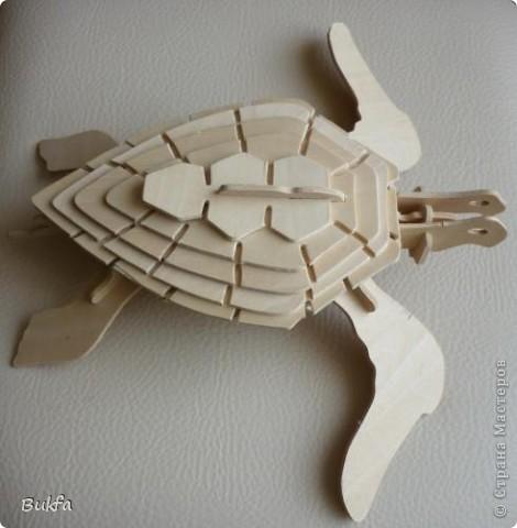 Дорогие мастерицы и мастера! Я, наконец-то пришла к концу серии фоторепортажей (ха-аха) о небольшой коллекции черепах, которую собирали мы всей семьюй. Если заинтересовались посмотрите раньше загруженные здесь: http://stranamasterov.ru/node/151515 http://stranamasterov.ru/node/151571 http://stranamasterov.ru/node/151613 http://stranamasterov.ru/node/152140 http://stranamasterov.ru/node/152480 http://stranamasterov.ru/node/152628  Закончить решила показом черепах самодельных. Таких тоже есть немножко. Надо бы расширить их ассортимент, да появилось другое увлечение - фигурки ангелов. Ну ладно хватит распинаться. Это сборная модель черепахи. Вот она-то самая большая в доме. Опять моя любимая водяная. Собирал сын, он тогда в школе учился. Конечноиз покупного набора. Но все-таки поделка. Или нет?. Фото 1