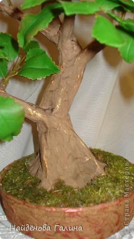 Мастер-класс Лепка: Как я делаю ствол .Бонсай.Яблоня в цвету. Фарфор холодный. Фото 1