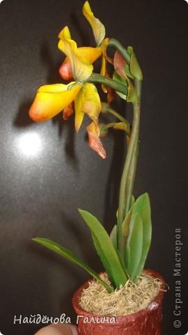 Мастер-класс Лепка: Как я делала Венерин башмачок из холодного фарфора. Фарфор холодный. Фото 17