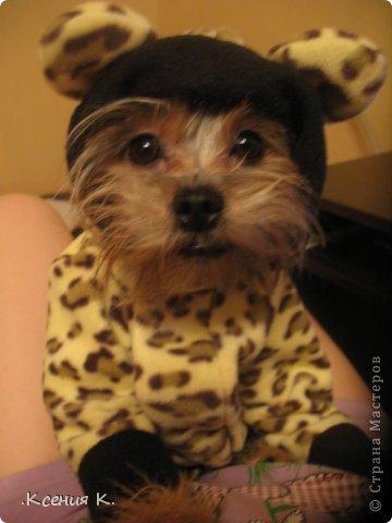 Мастер-класс Шитьё: Обещанный мастер класс по пошиву комбинезона для собак Ткань. Фото 1