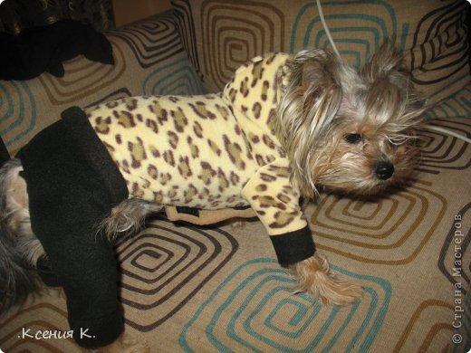 Мастер-класс Шитьё: Обещанный мастер класс по пошиву комбинезона для собак Ткань. Фото 35