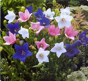 Мастер-класс Оригами МК Цветы Бумага фото 58