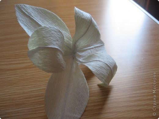 Мастер-класс Свит-дизайн День учителя Моделирование конструирование Сладкий букет Белые лилии + МК Бумага гофрированная фото 12
