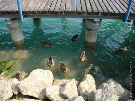 Италия / г.Сирмионе / сентябрь 2009г ********************************************* Сирмионе - небольшой старинный городок, расположен на живописном полуострове самого большого озера Италии - Гарда (на южной оконечности озера), в часе езды от Милана. Население городка составляет 5 800 человек.  фото 4