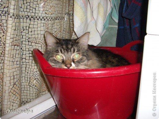 """Есть у меня питомец по имени Адам! Была еще и Ева, но """"унеслась к богам"""", Теперь любимый котик живет у нас один, Хозяин в нашем доме ! Нет, даже, господин!!! Он спит, лишь,там, где хочет,ест, правда, что дадут, Хочу его представить...Портфолио ,вот, тут... фото 10"""