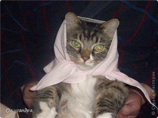 """Есть у меня питомец по имени Адам! Была еще и Ева, но """"унеслась к богам"""", Теперь любимый котик живет у нас один, Хозяин в нашем доме ! Нет, даже, господин!!! Он спит, лишь,там, где хочет,ест, правда, что дадут, Хочу его представить...Портфолио ,вот, тут... фото 6"""