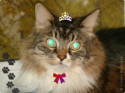 """Есть у меня питомец по имени Адам! Была еще и Ева, но """"унеслась к богам"""", Теперь любимый котик живет у нас один, Хозяин в нашем доме ! Нет, даже, господин!!! Он спит, лишь,там, где хочет,ест, правда, что дадут, Хочу его представить...Портфолио ,вот, тут... фото 1"""