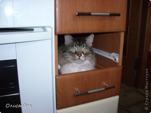 """Есть у меня питомец по имени Адам! Была еще и Ева, но """"унеслась к богам"""", Теперь любимый котик живет у нас один, Хозяин в нашем доме ! Нет, даже, господин!!! Он спит, лишь,там, где хочет,ест, правда, что дадут, Хочу его представить...Портфолио ,вот, тут... фото 17"""