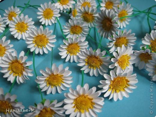 Мастер-класс Бумагопластика Квиллинг Цветы - ромашки Бумага фото 1