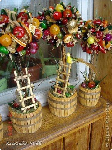 Бонсай топиарий Мастер-класс Моделирование конструирование мои фруктовые деревца как я их делаю  фото 8