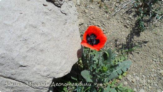 Фоторепортаж Экскурсия Коллаж Проводим экскурсии по Тбилиси  фото 27
