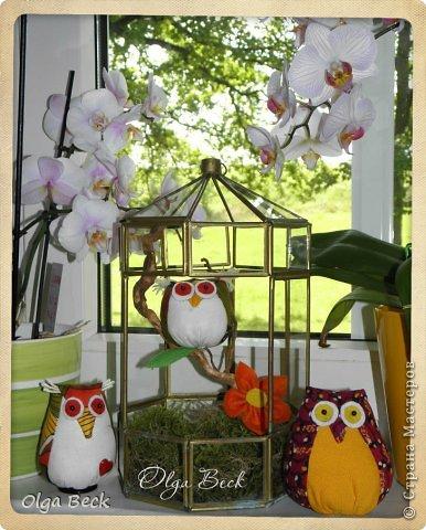 Мастер-класс Поделка изделие Шитьё Летние совы + выкройки Бусинки Дерево Картон Клей Ткань Фетр фото 2