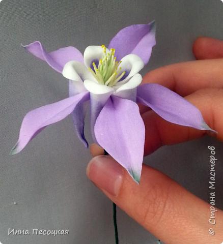На глаза  мне попался необычный  цветок. Называется «Аквилегия», простонародное название  - «Водосбор». Форма интересная, расцветки  разнообразные. Сорвала цветочек, разобрала на «запчасти» соцветие, обвела на бумаге и получила шаблоны в натуральную величину. Собрала. Вот что получилось… фото 1